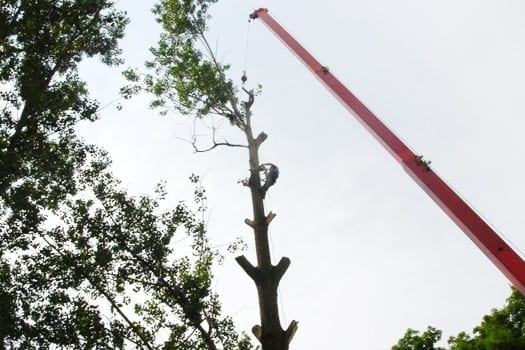 EMONDAGE GV | Professional Tree Services